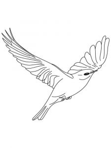 Bluebird-birds-coloring-pages-3