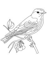 Bluebird-birds-coloring-pages-4