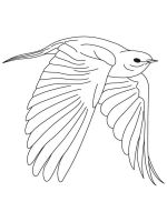 Bluebird-birds-coloring-pages-6