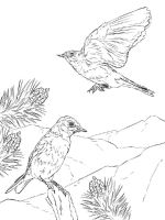Bluebird-birds-coloring-pages-8