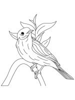 Bluebird-birds-coloring-pages-9