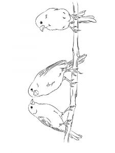 Canary-birds-coloring-pages-11