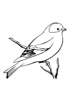 Canary-birds-coloring-pages-12