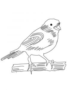 Canary-birds-coloring-pages-6