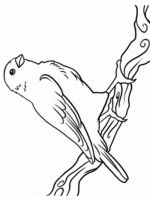 Canary-birds-coloring-pages-8