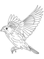 Canary-birds-coloring-pages-9