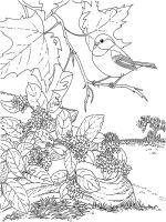 Chickadee-birds-coloring-pages-1