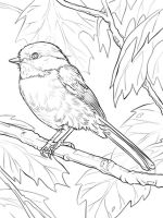 Chickadee-birds-coloring-pages-2