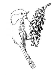 Chickadee-birds-coloring-pages-4