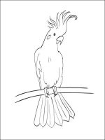 Cockatoos-birds-coloring-pages-3
