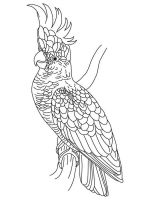 Cockatoos-birds-coloring-pages-5