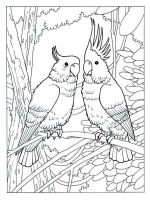 Cockatoos-birds-coloring-pages-6