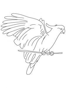 Cockatoos-birds-coloring-pages-7
