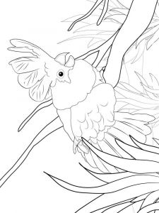 Cockatoos-birds-coloring-pages-8