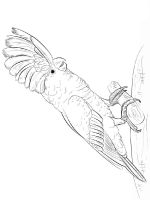 Cockatoos-birds-coloring-pages-9