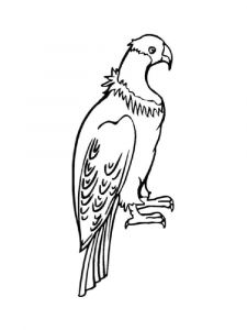 Condors-birds-coloring-pages-12
