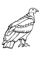 Condors-birds-coloring-pages-13