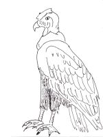 Condors-birds-coloring-pages-2