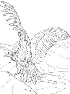 Condors-birds-coloring-pages-3