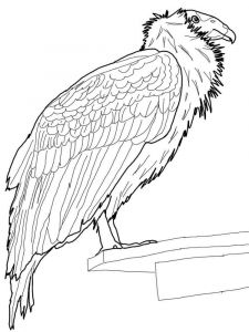 Condors-birds-coloring-pages-9