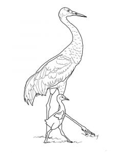 Cranes-birds-coloring-pages-10