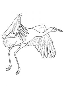Cranes-birds-coloring-pages-11