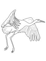 Cranes-birds-coloring-pages-11