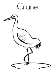 Cranes-birds-coloring-pages-3