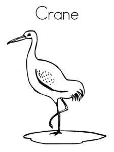 Cranes-birds-coloring-pages-3