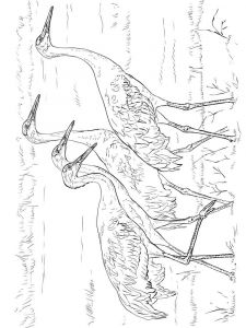 Cranes-birds-coloring-pages-6