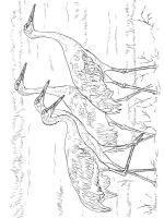 Cranes-birds-coloring-pages-6