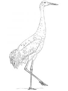 Cranes-birds-coloring-pages-8