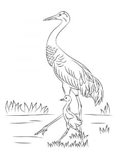 Cranes-birds-coloring-pages-9