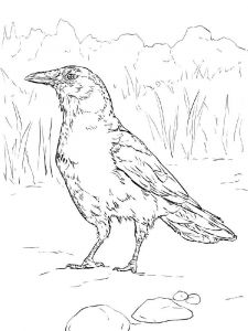 Crows-birds-coloring-pages-11