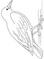 Crows-birds-coloring-pages-2