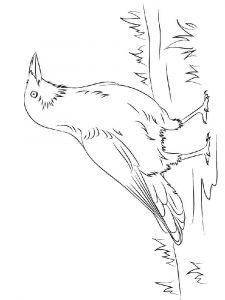 Crows-birds-coloring-pages-5