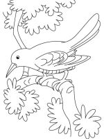 Crows-birds-coloring-pages-8