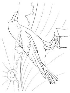 Crows-birds-coloring-pages-9