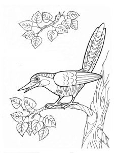 Cuckoos-birds-coloring-pages-10