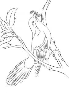Cuckoos-birds-coloring-pages-11