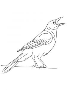 Cuckoos-birds-coloring-pages-12