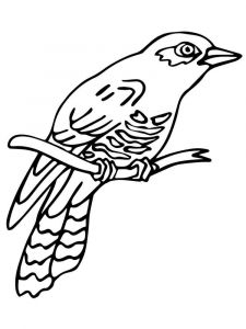 Cuckoos-birds-coloring-pages-13
