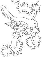 Cuckoos-birds-coloring-pages-2