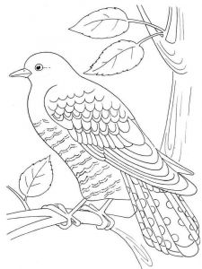 Cuckoos-birds-coloring-pages-5