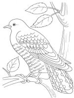Cuckoos-birds-coloring-pages-5