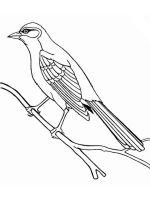 Cuckoos-birds-coloring-pages-8