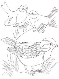 Cuckoos-birds-coloring-pages-9