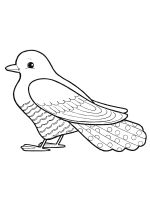 coloring-pages-Cuckoos-1