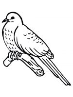coloring-pages-Cuckoos-2