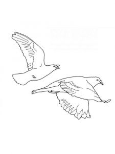 Doves-birds-coloring-pages-1